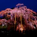 【春限定】磐梯熱海の春を満喫!・・・